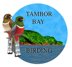 birds of costa rica field guide